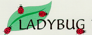 4 ladybugs on leaf bug0026.jpg
